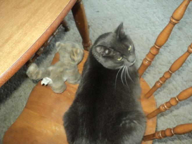 Substitute Kittens