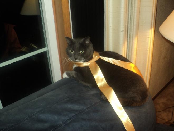 December 9: Christmas Cat
