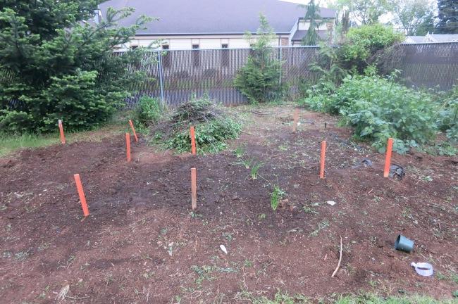 My garden 2014